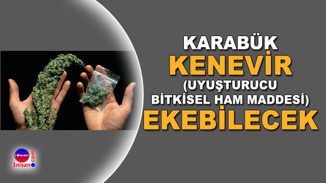 Karabük'te kenevir yasallaştı