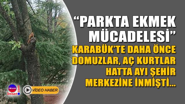 Karabük şehir merkezindeki parkta ekmek mücadelesi